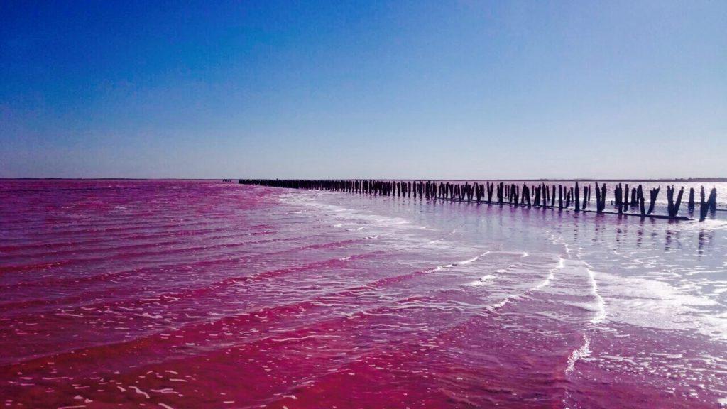 розовое озеро Сасык Сиваш в Евпатории фото